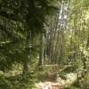 Barfuß-Spaziergang im Wald